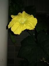 夜幕下的花儿
