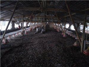 太阳集团43335.com桃园镇养殖区养殖棚两条出售
