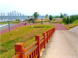 天汉湿地公园秋景迷人(一)
