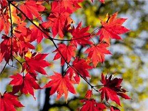秋�L悠�P,�h�h���;秋�正好,暖暖融融。踏著�p悠的步伐,沐浴在�p柔的秋�L里,徜徉在�睾偷那镪�下,看�{