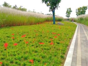 澳门美高梅国际娱乐场天汉湿地公园秋景迷人(二)