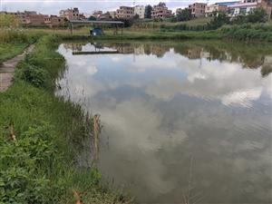 自建鱼塘,鱼塘占地1.6亩,总使用面积11亩,可以烤鱼,烧烤,设备齐全,水电齐全,有停车场停车方便!...