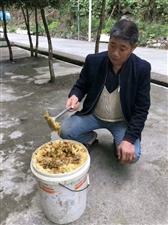 纯正土蜂蜜开始收割了。