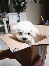 买狗容易养狗难
