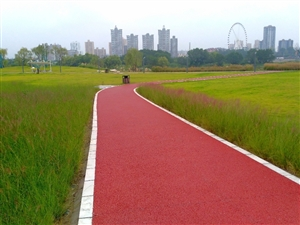 天汉湿地公园秋景迷人(四)