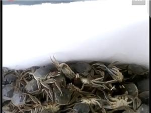 南美對蝦批發零售