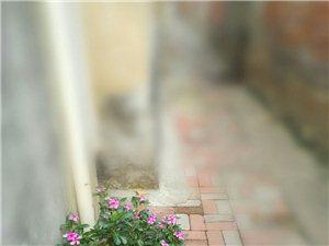 深巷中的一束惊艳...美,无处不在!