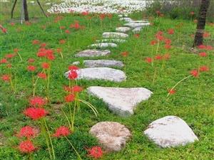 天汉湿地公园秋景迷人(五)