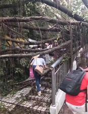 山竹终于悄燃至熄的走了,深圳出现难得一见的城市树木森林。