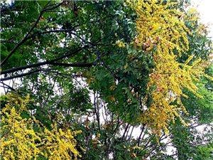 天汉湿地公园秋景迷人(六)