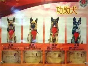 """泪目!""""5.12""""汶川地震英雄搜救犬""""银虎""""走了"""