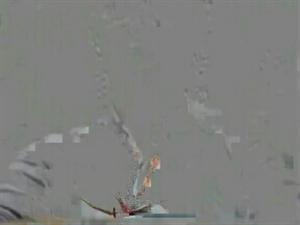 大米哥冻库飞出一只凤凰