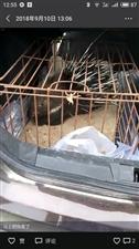 中秋节来了有想吃刺猪的朋友请联系我电话15286751711