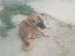偷狗贼今天把我家的两过狗都打去了。望有关部门查查,我家门口马路上装有监控摄像头。