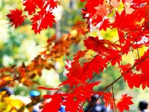 修理闲置已久的梯子吧修理疯长的心事去果园记录由绿转红的诗行当清晨的霜露出