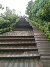 秋踏黄桷树公园