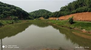深圳罗田森林公园随拍