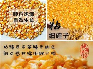 新玉米黏玉米粒玉米面玉米碴