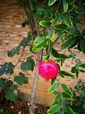 秋日最后的红,为它的坚守而感动!