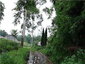 现在还有这种路,这就是骑龙镇原沙��村10组大家看嘛下了雨,就是水泥路,