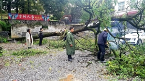 来凤半边城大树倒下砸坏小轿车!