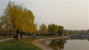 落叶.人民公园