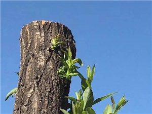 枯木为何逢春?