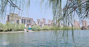 临泉・碧桂园3室2厅2卫73万元