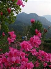 《桐城小花》