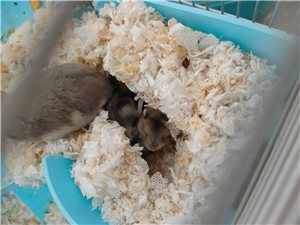 出售�}鼠