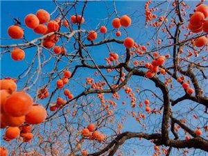秋天是丰收的季节,也是成熟的季节。