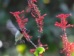 看鸟去新会小鸟天堂,拍鸟来澳门金沙线上真人赌博度假村酒店