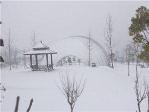 直播大悟雪景,看看,大悟环河公园的雪