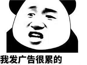 上海浦东新区回汉中城固