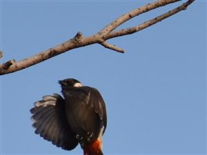 """""""打""""鸟的好地方"""