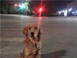 寻狗,有哪位朋友看到,必定重金感谢。