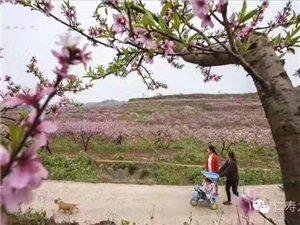 金光村桃花源――城市后花园