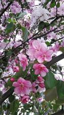 春天是花的海洋