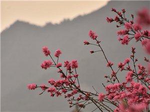 春满桃花江