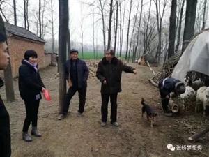 羊为媒,66岁的贫困户迎来人生第一春