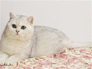 东营猫猫找新家