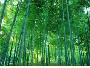���}?竹子做的家具好�幔�