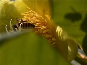 这里真的有自产自销的蜂蜜,不信你去看看