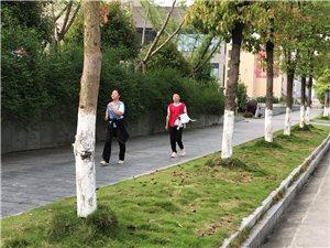 中百发起员工竞走比赛,强身健体走起!