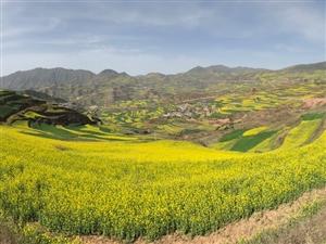 中国西北角一个叫武山的地方油菜花惊艳亮相尤如世外桃源