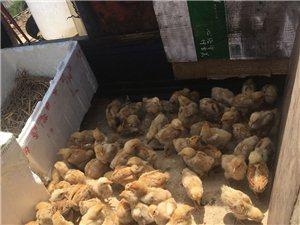 出售:绿色食品土鸡土鸡蛋土鸭,土猪肉,绿色蔬菜等