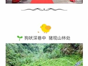山水画廊休闲地,乡村农家乐【亿兆庄】等你来!
