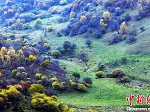 张家川在线发布张家川抖友征集令助力关山文化旅游节