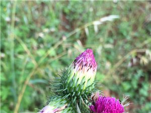 南山背后一束花