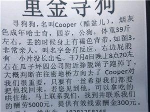 ��Cooper回家